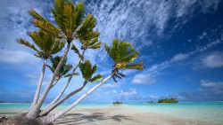 Coconut-Palm-Trees-on-small-motu-atoll-in-lagoon-6-Fakarava-Tahiti3
