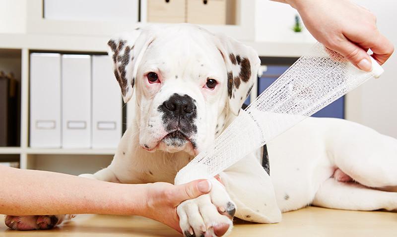 Dog-First-Aid