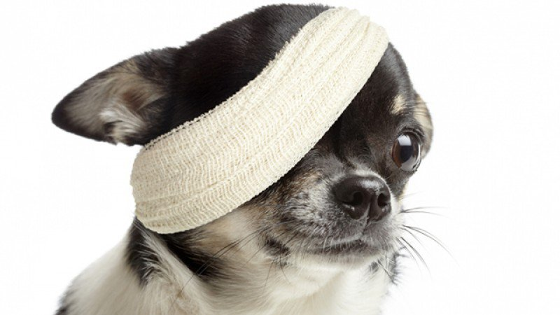 dog-injury_wi
